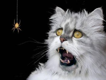 Scared-of-spiders